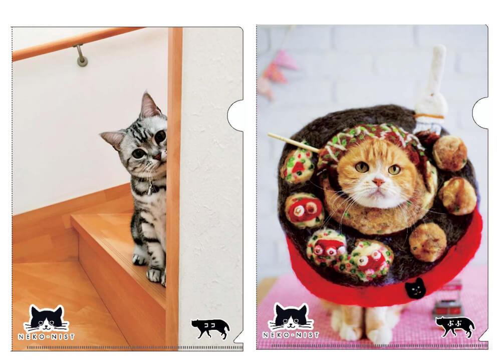 猫の写真入りクリアファイル