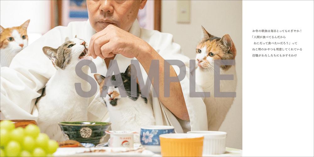 那須の長楽寺、4匹の猫にまみれて朝ごはんを食べる住職さん