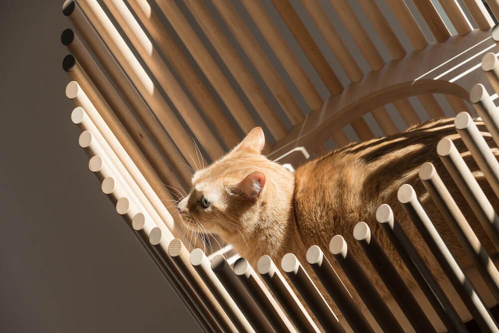 高級キャットツリーNEKO(Modern Cat Tree)の製品イメージ by RINN Inc.