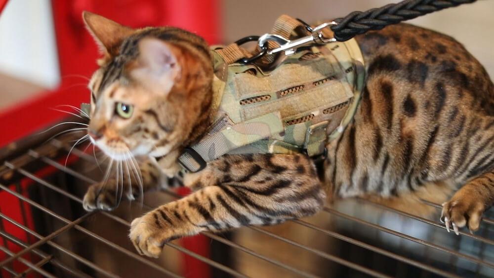 KILONINER(キロナイナー)の犬猫用ベスト第4世代モデル「M4 Tactical MOLLE Vest Laser Cut」を装着した猫