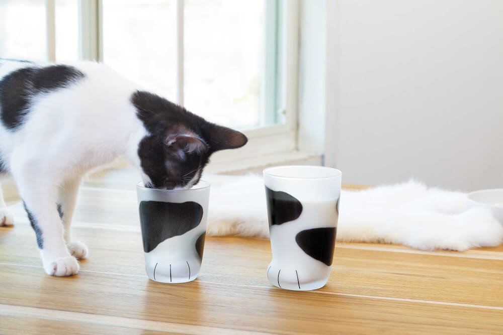 白黒猫の手足を再現した「ブチ柄」