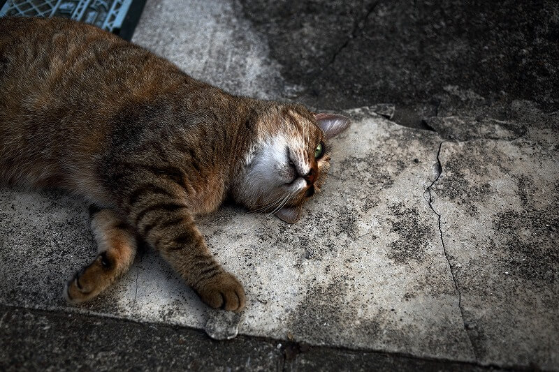 コンクリートの上で寝転ぶ野良猫の写真 by やおちあき