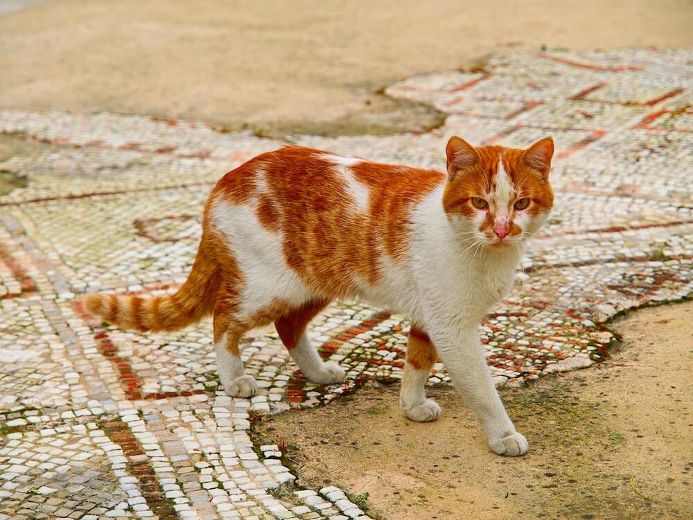 キプロス島のリマソール城で撮影された猫の写真