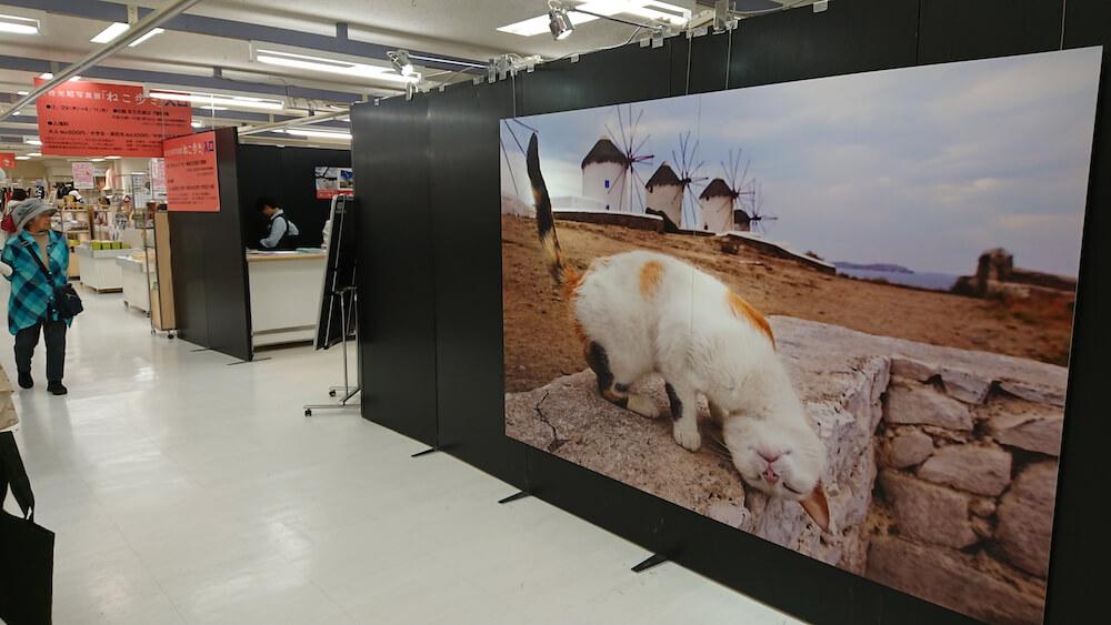 昨年の岩合光昭さんの写真展の様子