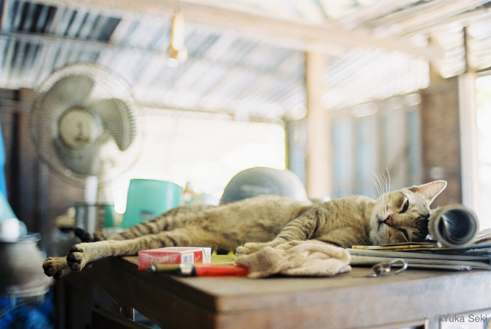 机の上に横たわる猫の写真 by 関由香