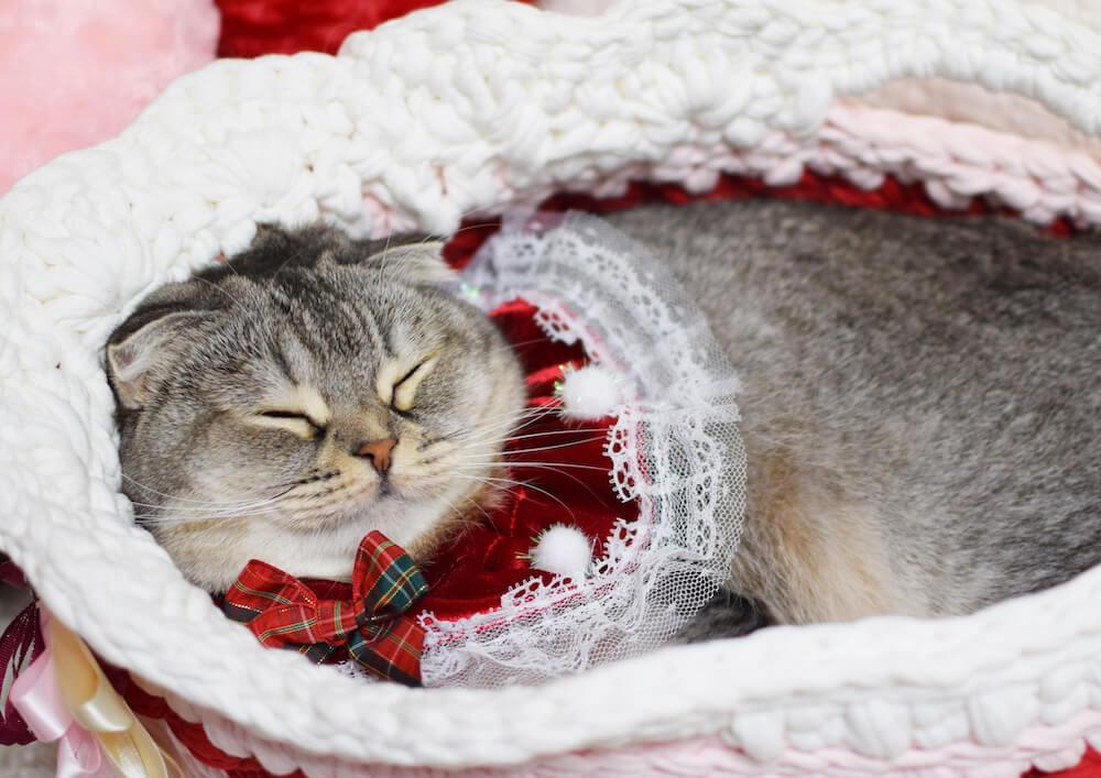 人気猫「つぶまろちゃん(@gohanpantsubu)」の寝顔写真