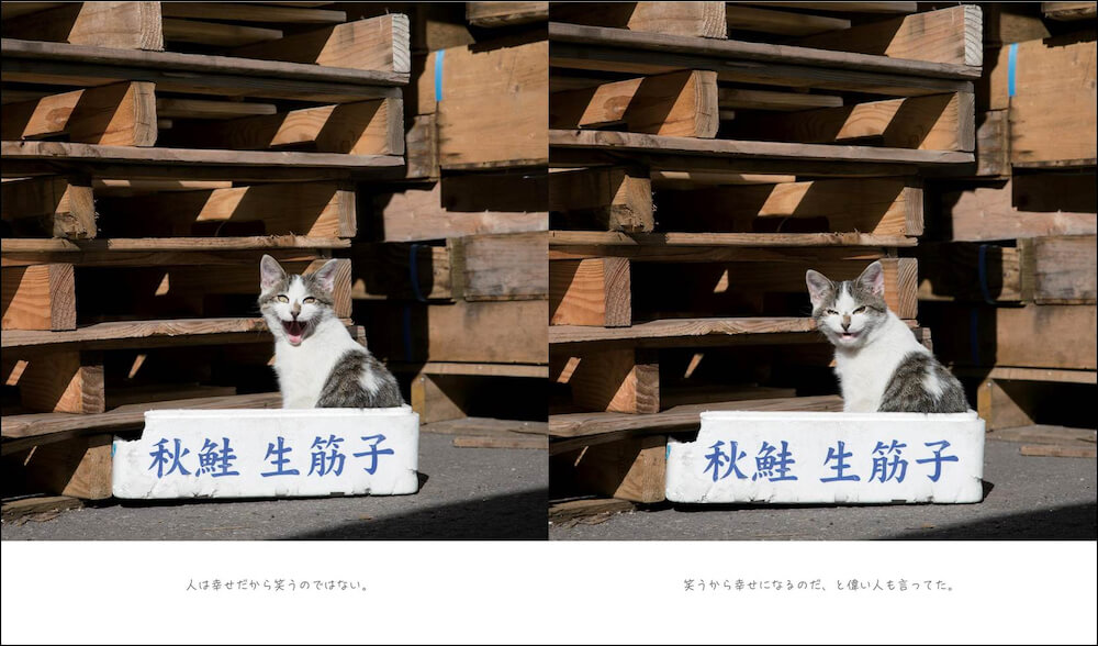 笑う猫の写真 by 写真集「明日はきっとうまくいく」