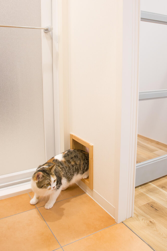 洗面所の壁とリビングを繋ぐ猫の出入口