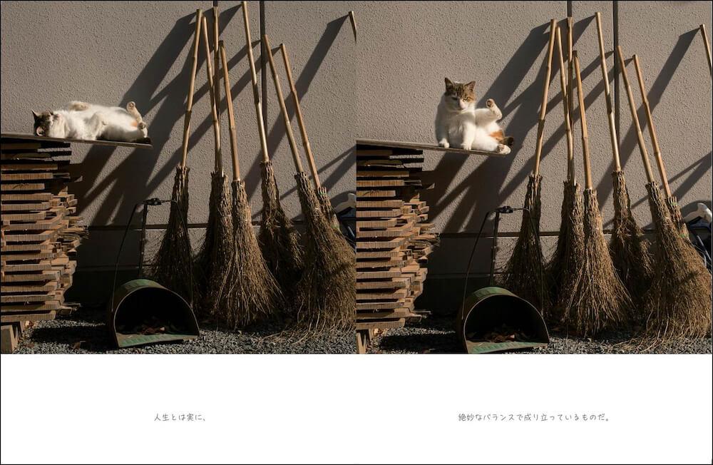 バランスを取る猫の写真 by 写真集「明日はきっとうまくいく」