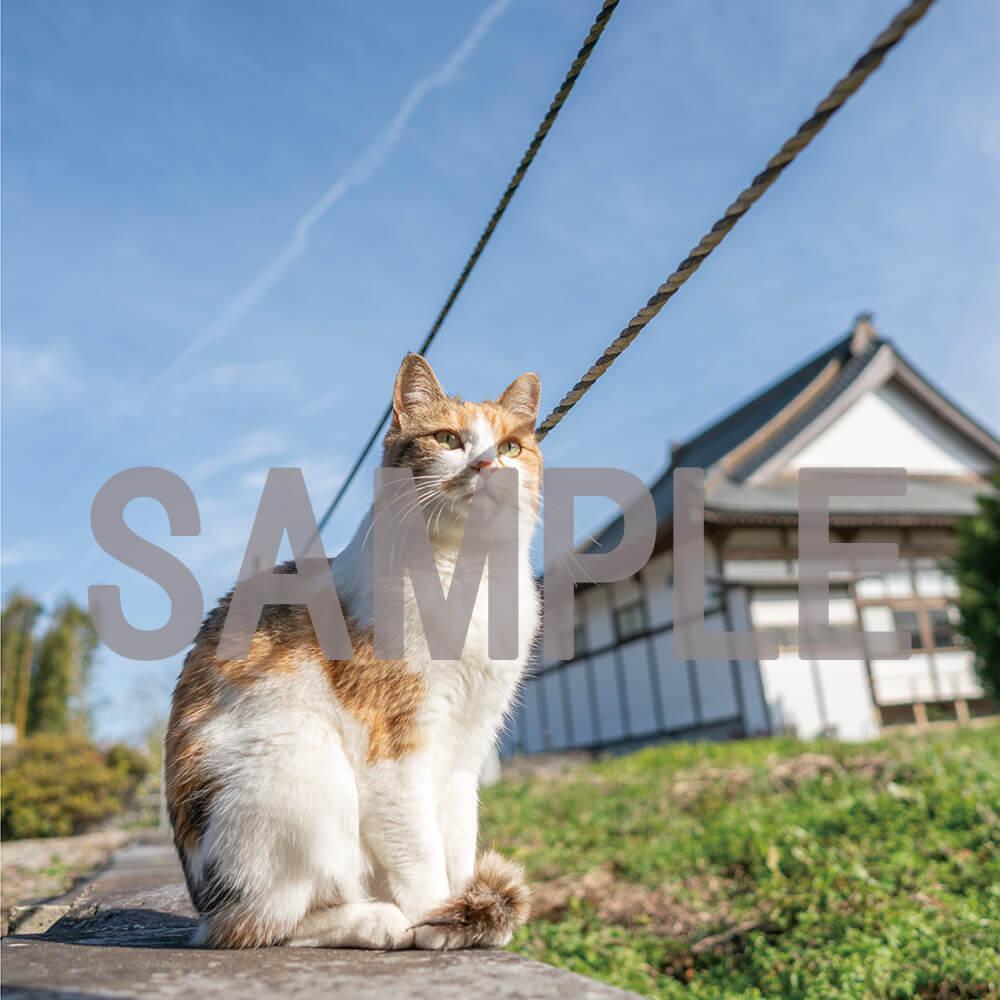 那須の長楽寺で暮らす猫のイメージ写真