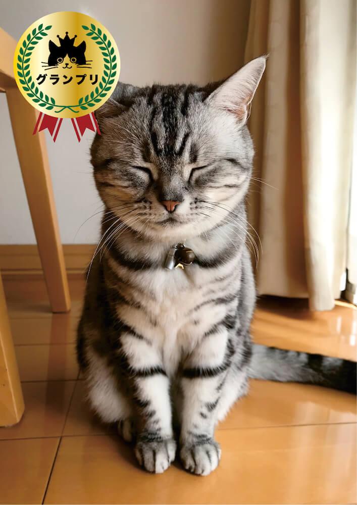 「ねこ寝ッコ コンテスト」グランプリを受賞した猫ココちゃん/@chayako.coco