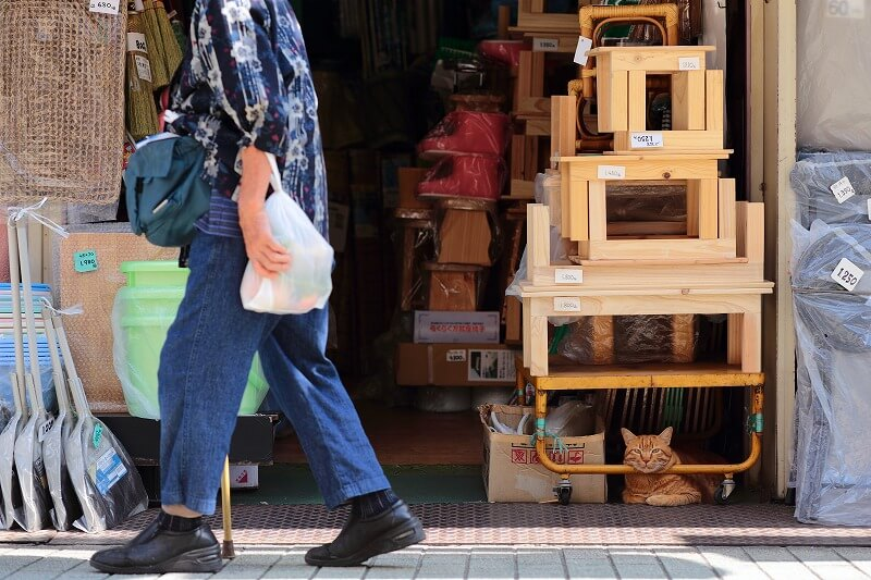 商店の店先でくつろぐ茶トラ猫 by奥村準朗