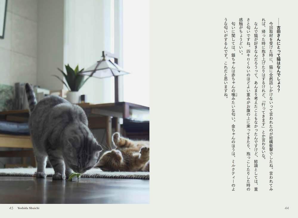 吉田修一の猫 by ネコメンタリー