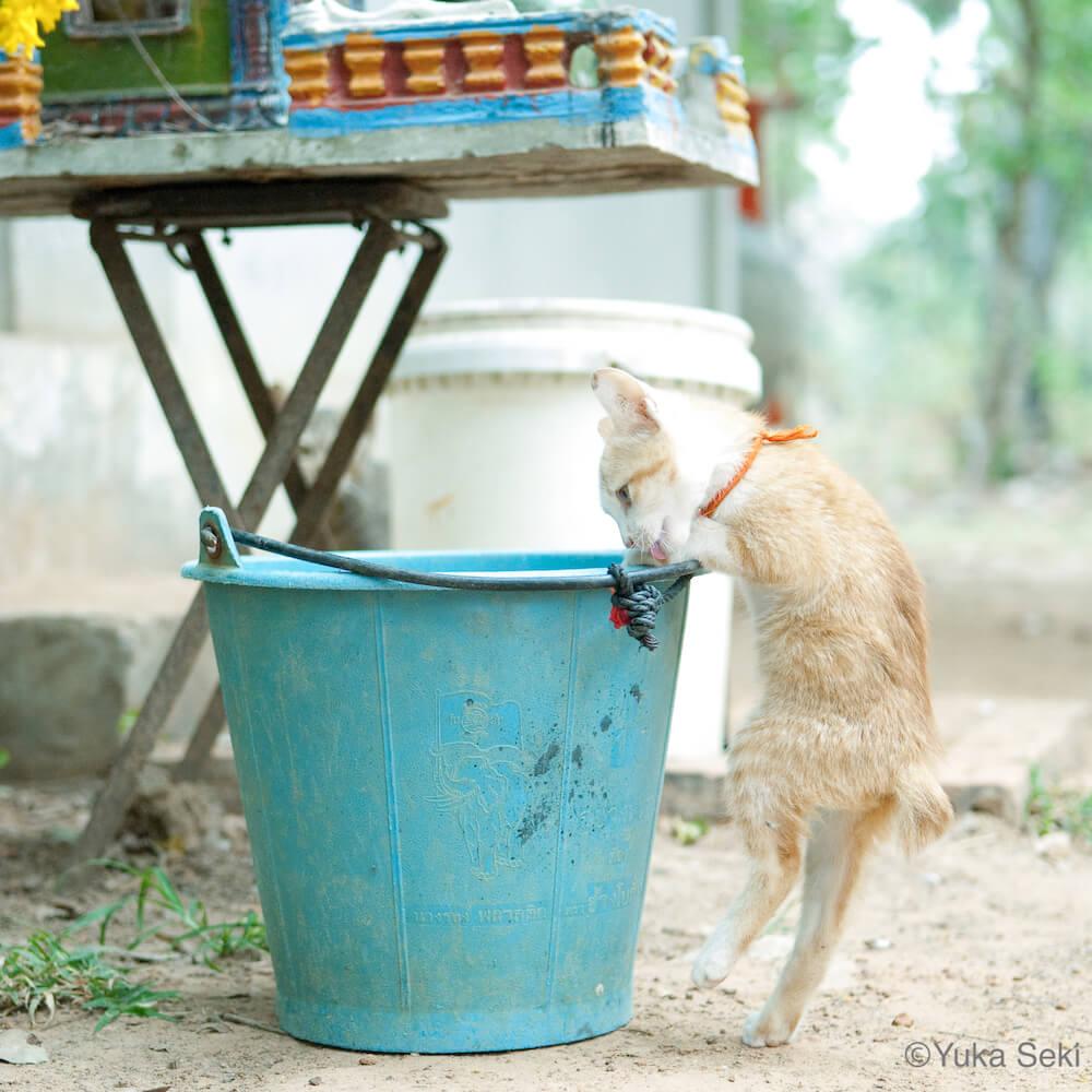 立ってバケツの水を飲むの写真 by 関由香