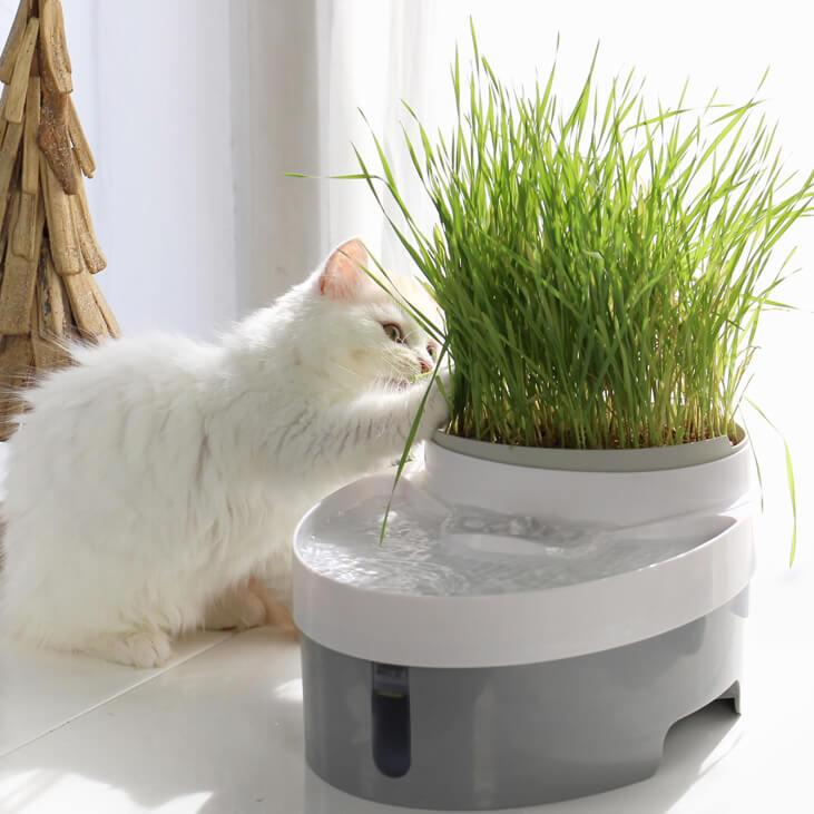 多目的ボウルに猫草を置いたイメージ by 自動給水器「WAGWAGウォーターファウンテン」
