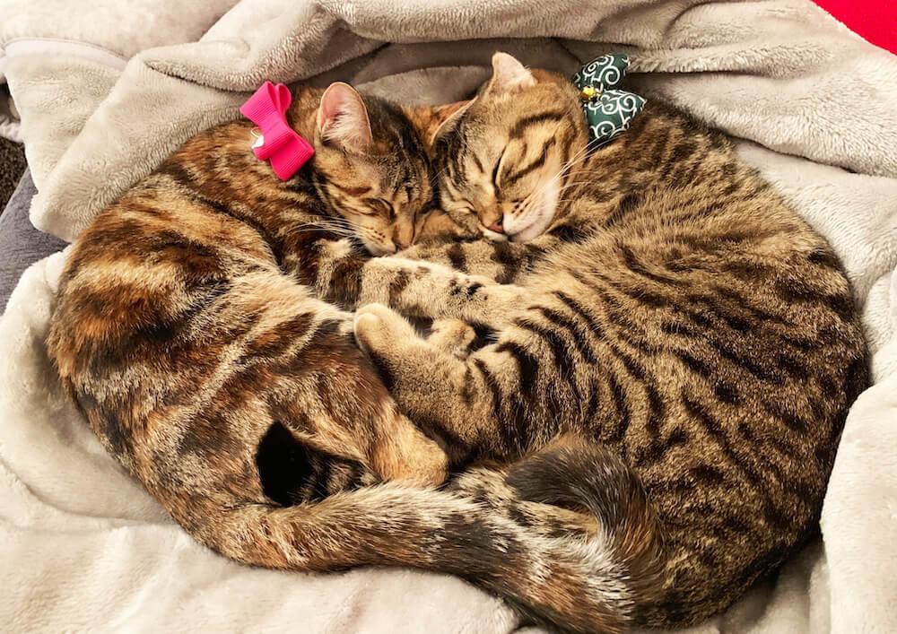 抱き合う人気猫(@rody.tino.tomoko)の寝顔写真