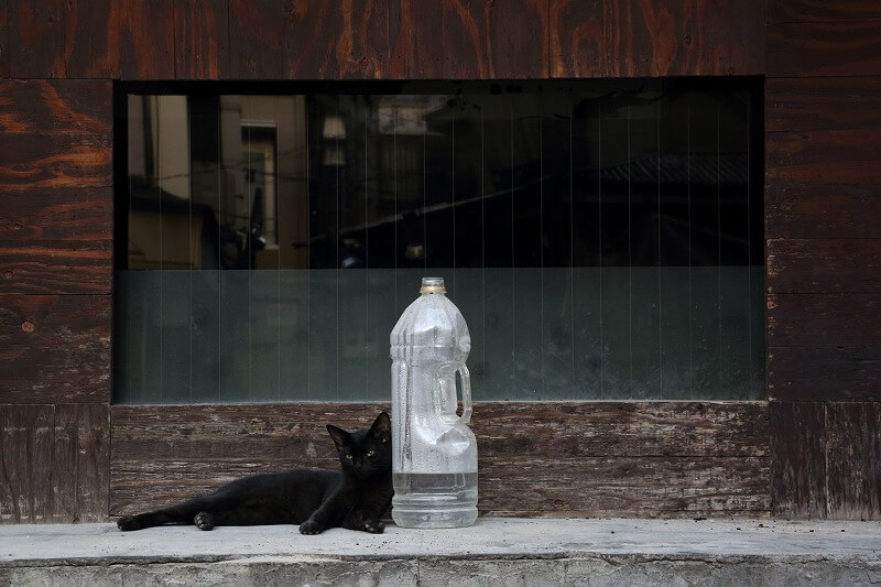 猫よけのペットボトルにもたれ掛かる猫の写真 byやすえひでのり