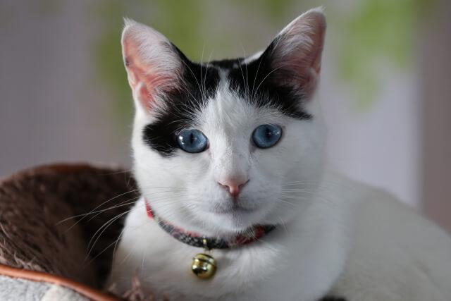 鈴を付けた飼い猫のイメージ写真
