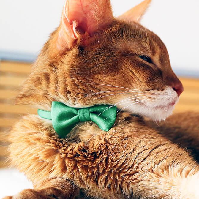 お洒落な猫用品ブランド「necono」のリボン首輪