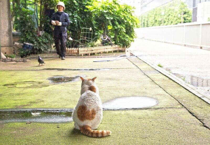 鳩と通行人を見つめる猫の背中の写真 byふかがわゆうこ