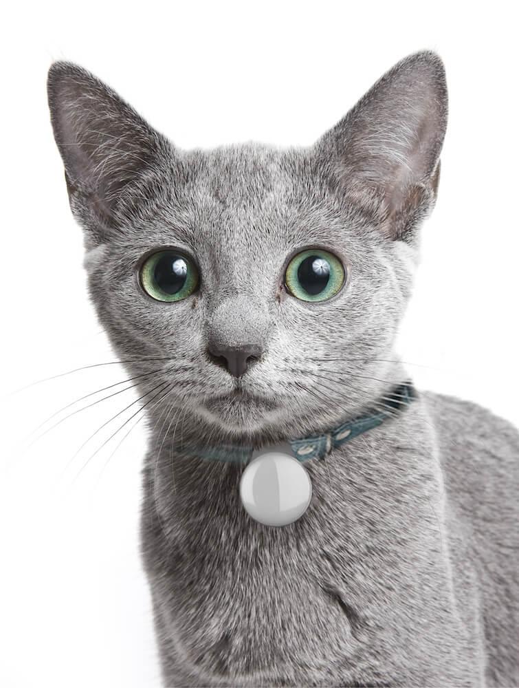 「ペットケアモニター」の固体識別バッジを装着した猫
