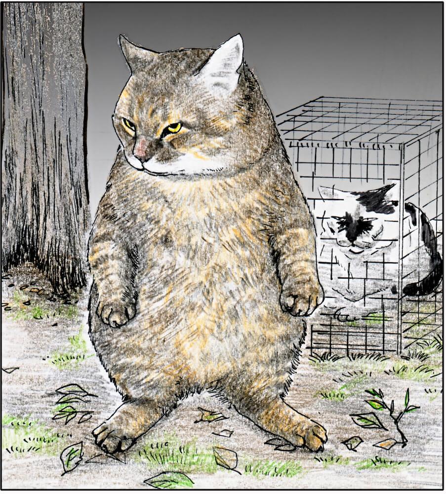 猫マンガ「俺、つしま」の第2巻発売が決定