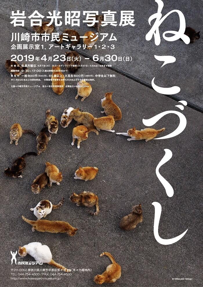 川崎市市民ミュージアムで開催される企画展「岩合光昭写真展 ねこづくし」のメインビジュアル