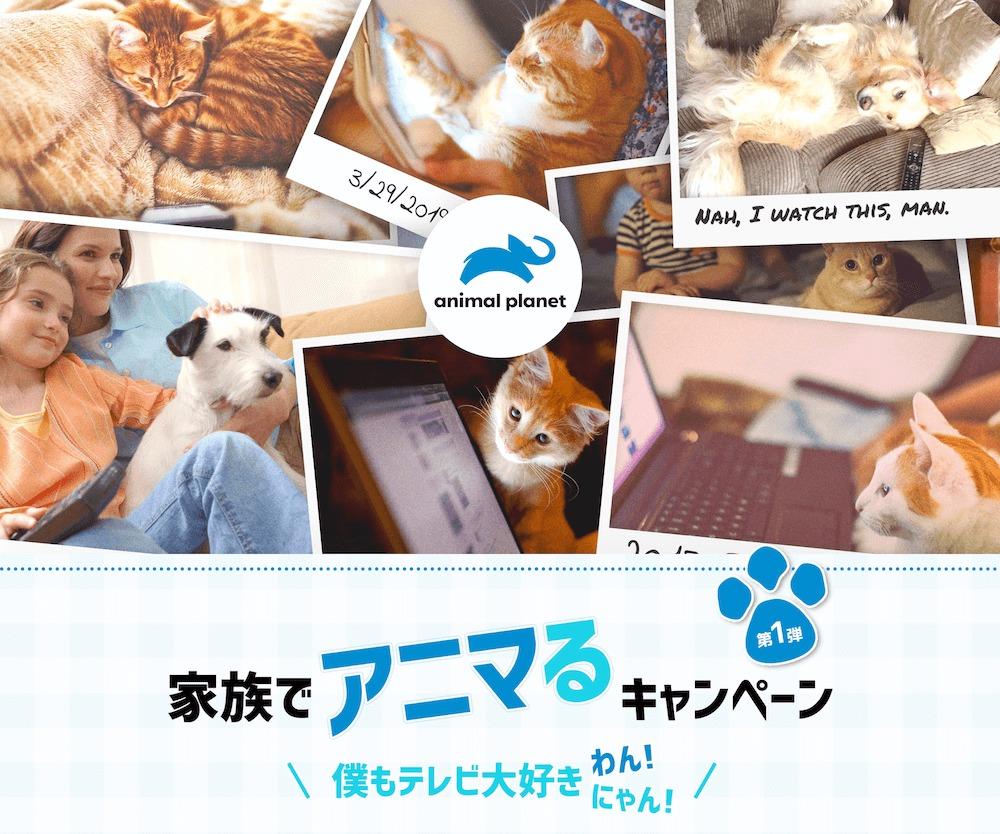 「家族でアニマるキャンペーン 第1弾 ペット写真・動画投稿キャンペーン」メインビジュアル by アニマルプラネット
