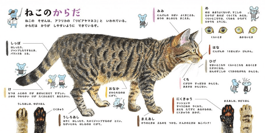 猫の各部位を平仮名で丁寧に解説した「ねこのからだ」 by ねこのずかん