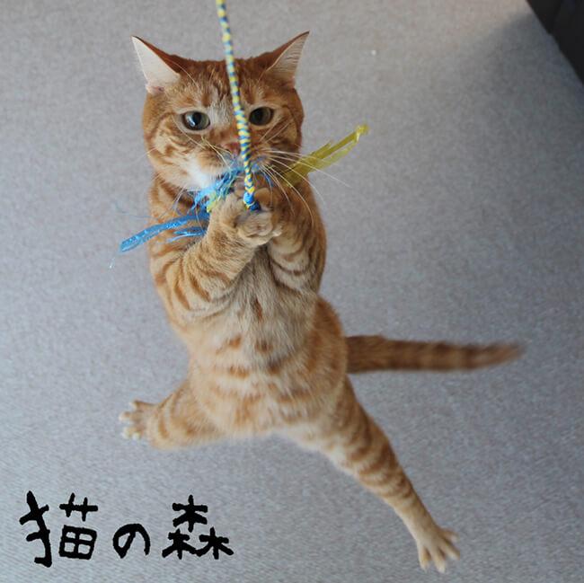 猫用おもちゃ by 猫の森