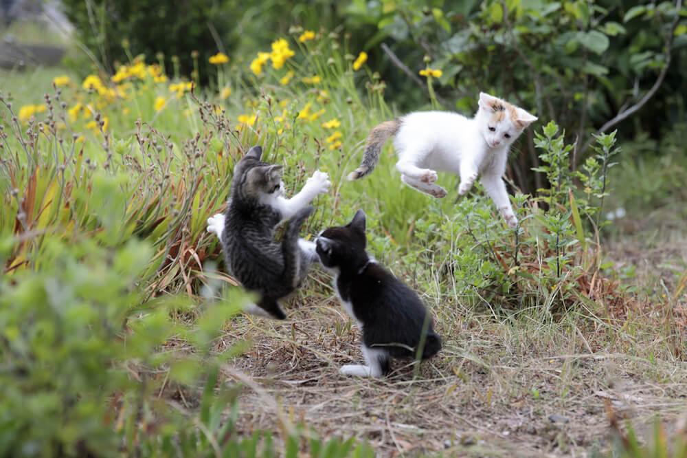 映画「旅する飛び猫」のイメージ