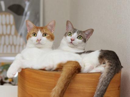 猫作品が集まる「ねこ休み展」の春コレクションが4月〜5月に静岡と広島のパルコで開催