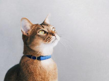 ネコの行動を24時間記録する首輪型のデバイス「キャトログ」、蔦屋家電+で実物を展示