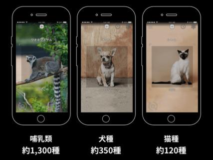 スマホをかざすだけで120種類のネコを判別!AI図鑑「リンネレンズ」がAndroid版も公開