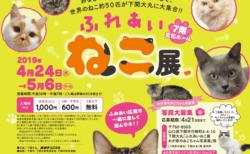 世界中の珍しい猫と触れ合える「ふれあいねこ展」が山口県の下関で4/24から開催