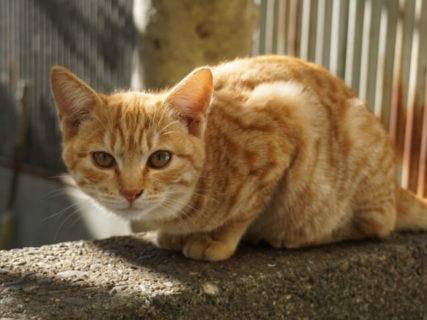 東京都が初めて猫の殺処分ゼロを達成、犬も3年連続でゼロを継続