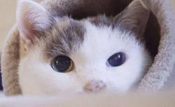 作家と猫の暮らしに密着する人気番組「ネコメンタリー」がDVD化、パネル展も開催中