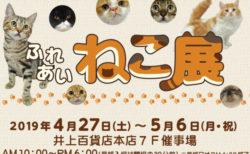 世界中の珍しい猫と触れ合える「ふれあいねこ展」が長野県の井上百貨店で4/27から開催