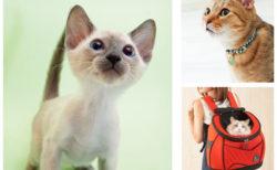 猫用品のセレクトショップ「necosekai」八王子オーパに期間限定でオープン