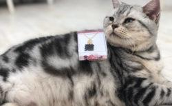 猫やフクロウなどの小動物とふれあえる「ゆめかわアニマルパーク」GW限定で大阪に登場
