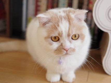 ちくわ柄の人気猫・ホイップの単独展「まるごとホイちゃん展」が4/27から東京で開催