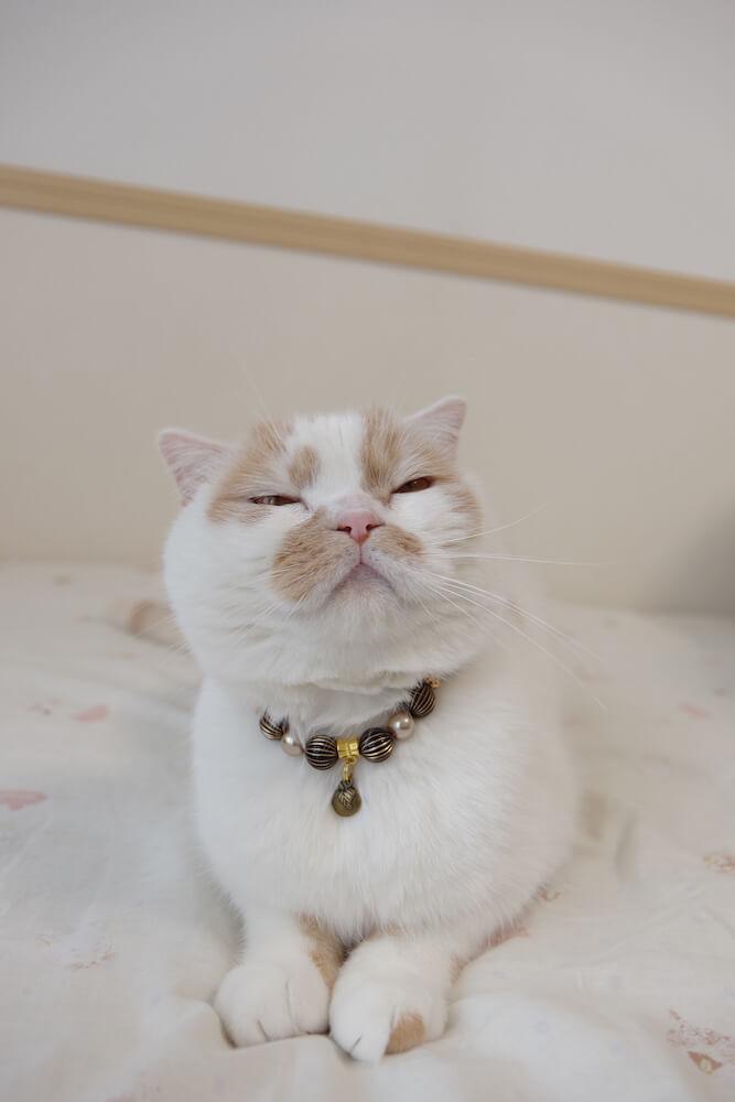 ちくわ柄の人気猫・ホイップ