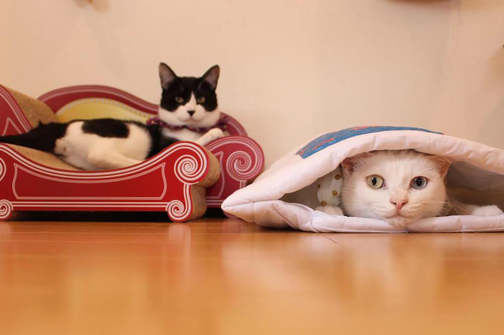カメラをじっと見つめる2匹の猫 by MaiYamamoto