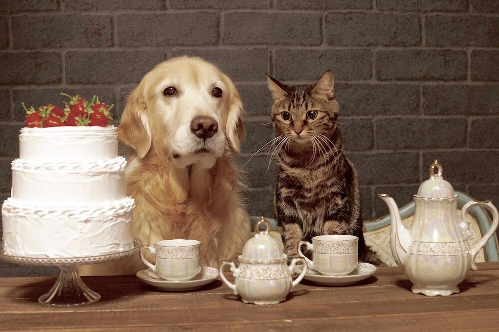 犬と猫の仲良しツーショット by わさびちゃんち