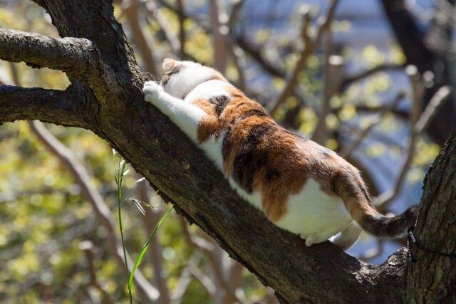 木に登る三毛猫のイメージ写真