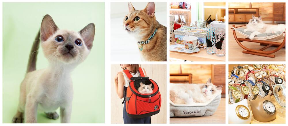 necosekai(ネコセカイ)が取り扱う猫用品イメージ