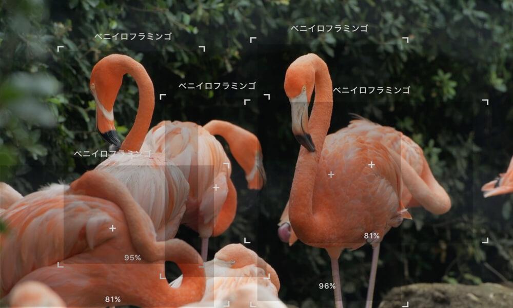 LINNÉ LENS(リンネレンズ)でフラミンゴを識別したアプリ画面イメージ