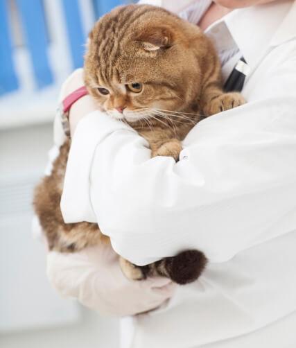 獣医師が猫を抱っこするイメージ