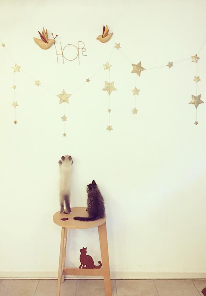 「ももとみらい」のネコ写真