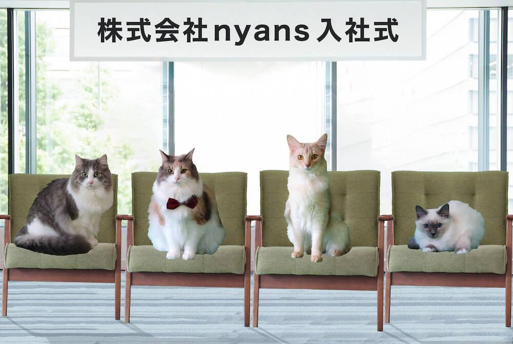 nyatching(ニャッチング)で行われた猫だけの「猫社員」の入社式の様子